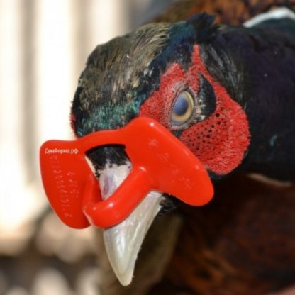 Очки для фазанов, кур, перепелов и молодняка без шпильки