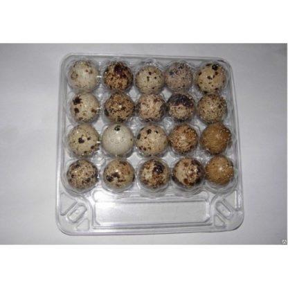 Упаковка на 20 перепелиных яиц ПЭТ прозрачная